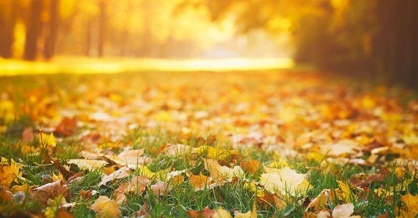 Dolci atmosfere d'autunno
