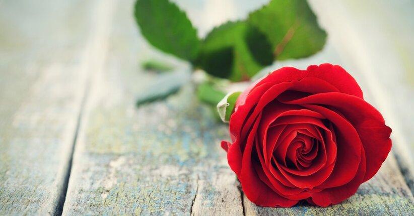Enneagramma biologico: focus sul romantico