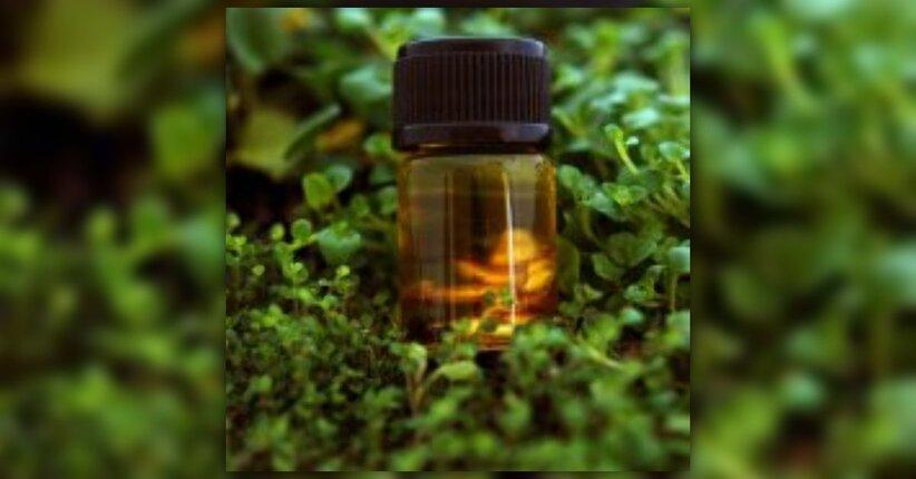 Gli olii essenziali: il codice invisibile delle piante