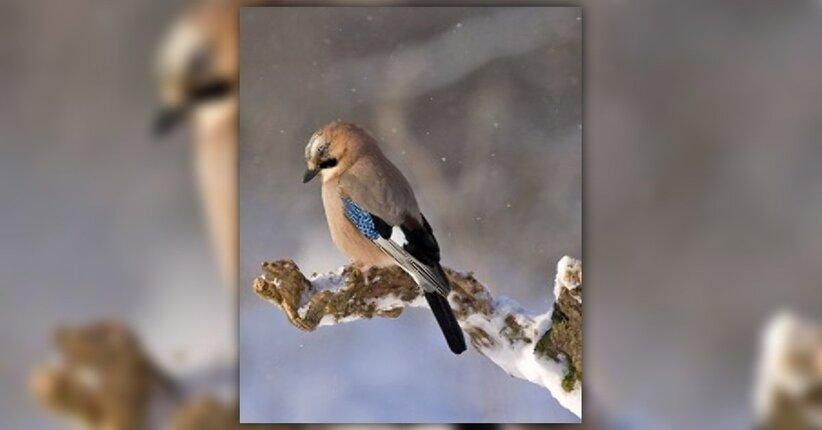 Gli uccelli selvatici in giardino