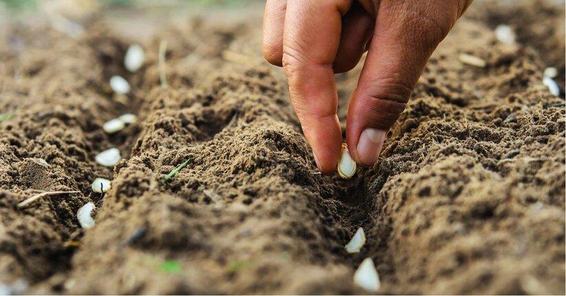 Guida alla semina: Tabella Orientativa per la Semina