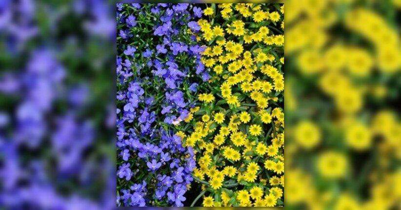 I fiori californiani e la loro azione sul mondo delle emozioni