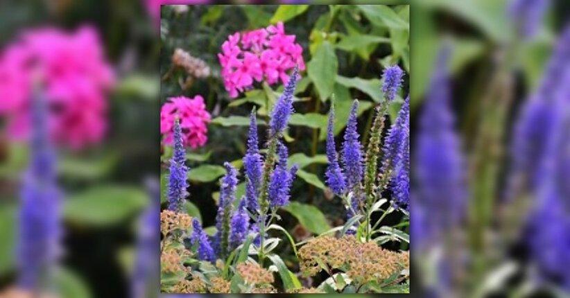 I fiori di Bach per la famiglia