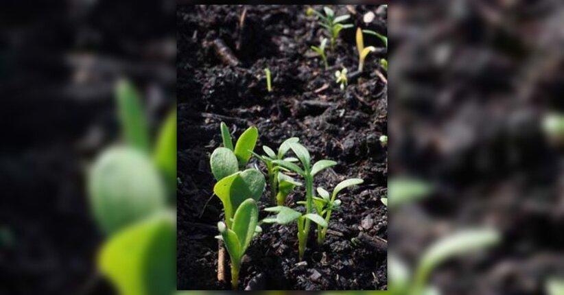 I semi a impollinazione aperta: cosa sono?
