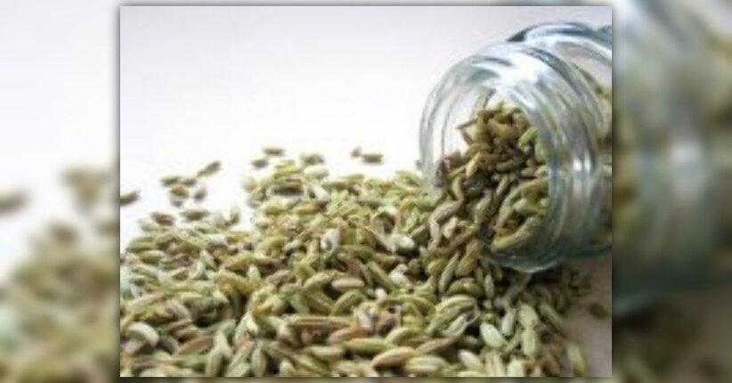 I semi di finocchio: perché fanno bene?