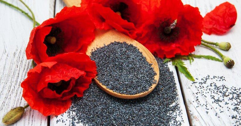 I semi di papavero: proprietà e benefici