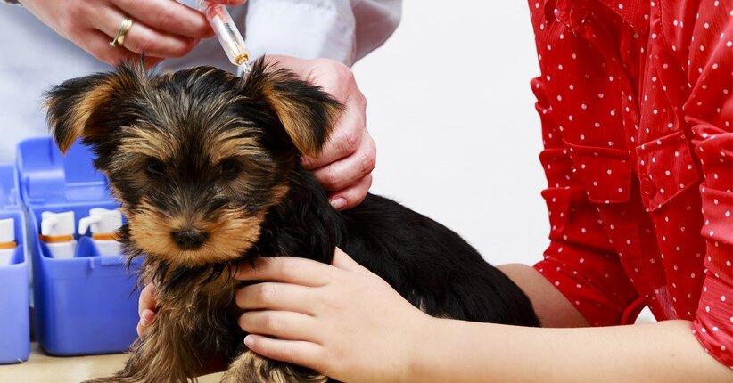 I vaccini per gli animali sono necessari?