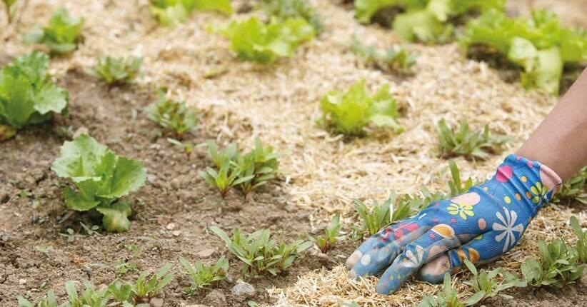 Il giardino che si cura da solo