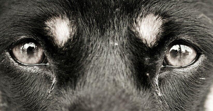 Il linguaggio degli occhi nel cane e nel gatto