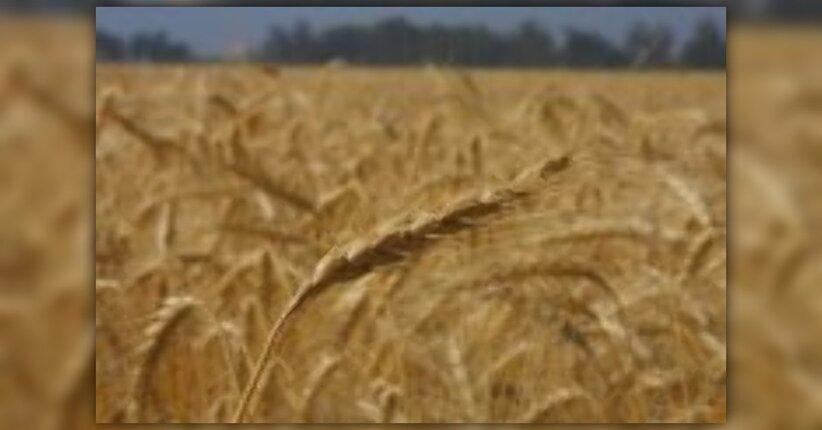 Il Lino dona semi e un olio preziosi per la salute