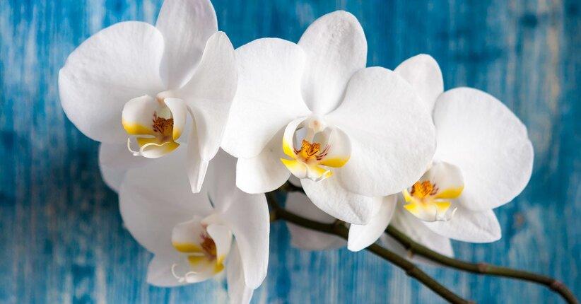 Il significato del colore bianco