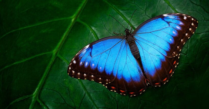 Il significato del colore blu