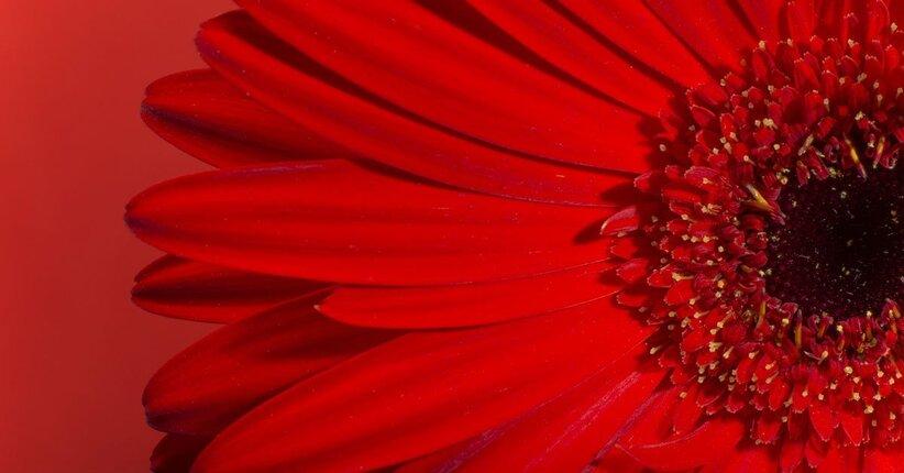 Il significato del colore rosso