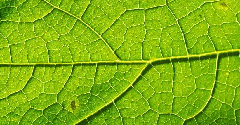 Il significato del colore verde