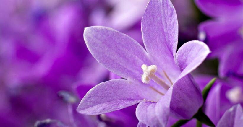 Il significato del colore viola