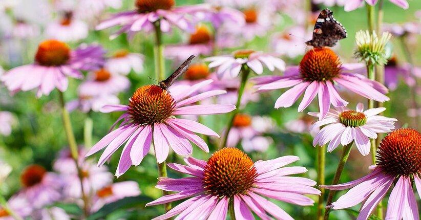 Integrazione con le piante: non solo concentrazione ma anche ricchezza