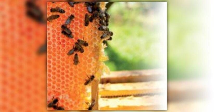 L'alveare non dà solo miele… anzi! [propoli]