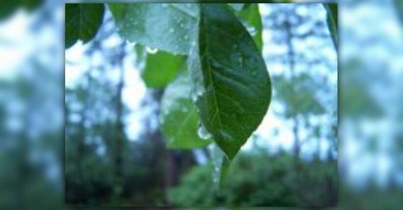 La naturopatia: la cura secondo la via della natura