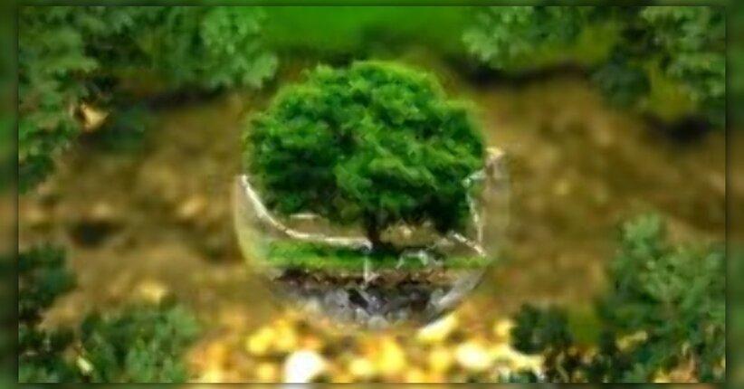 La pianta: coltivazione in biodinamica, relazione tra uomo, ambiente e pianta