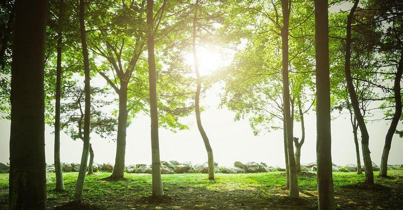 La silvoterapia, il potere guaritore degli alberi