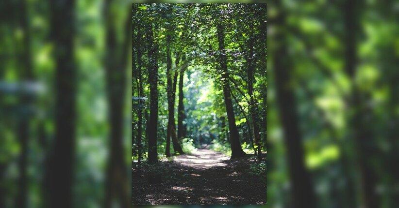 Cosa sentono gli alberi? Come comunicano?