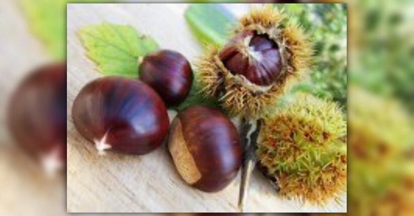 Le castagne. Benefici e ricette per un autunno al TOP