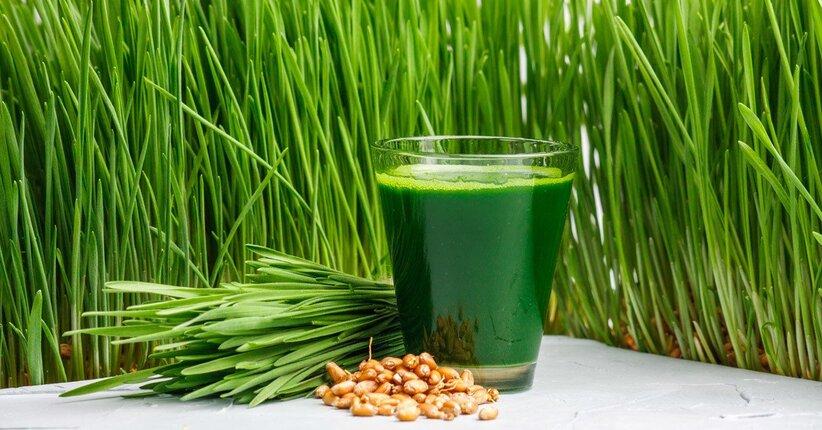 Le proprietà e i benefici dell'erba di grano