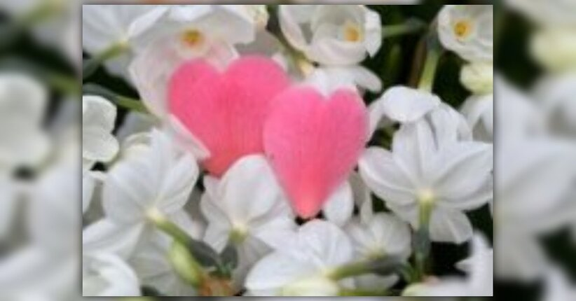 Massaggi fragranti per San Valentino