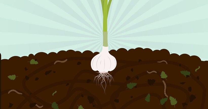 Microrganismi per migliorare le colture