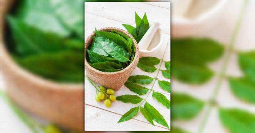 Neem: una pianta dalle mille proprietà