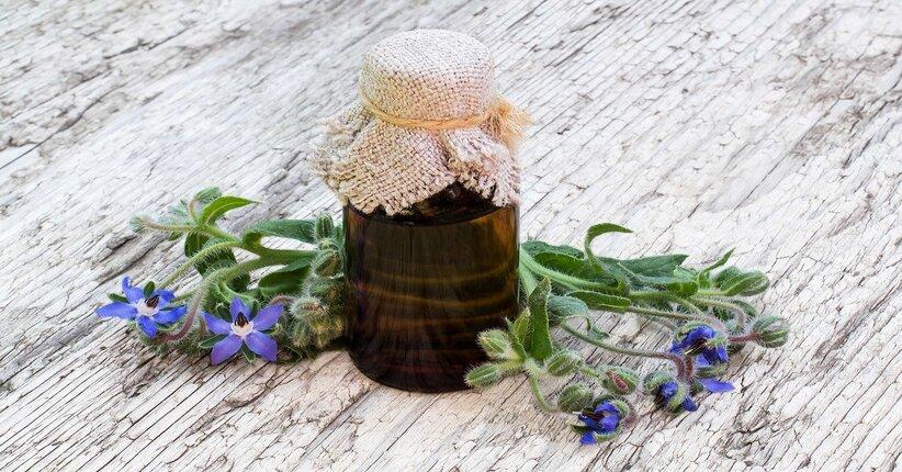 Olio di borragine: i benefici