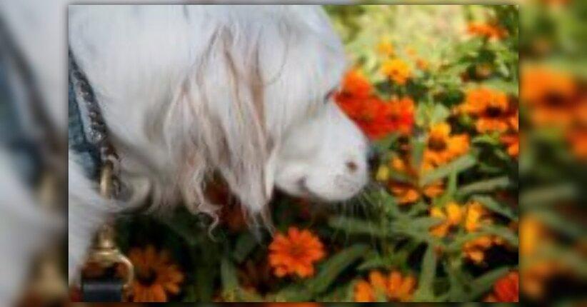 Petalus: fiori di Bach per animali