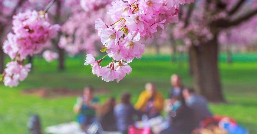 Ferragosto: ricette per il picnic