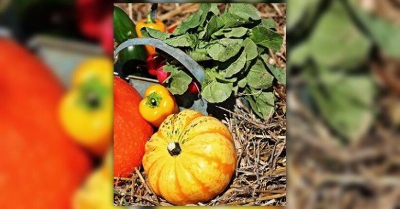 Porta l'autunno sulla tua tavola