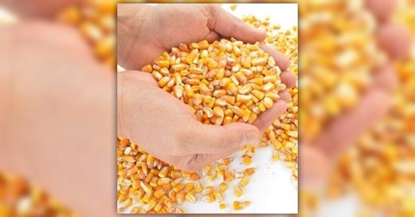 Qual è il cereale dell'estate?