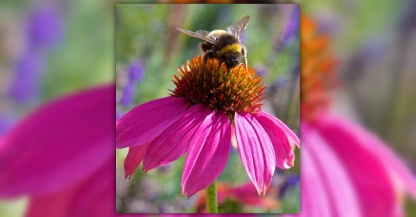 Quando la bella stagione tarda ad arrivare: tintura madre di Propoli ed Echinacea