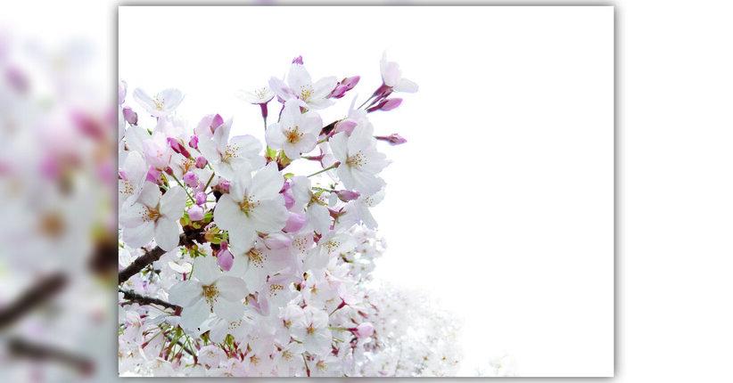 Quel fiore che ci sceglie