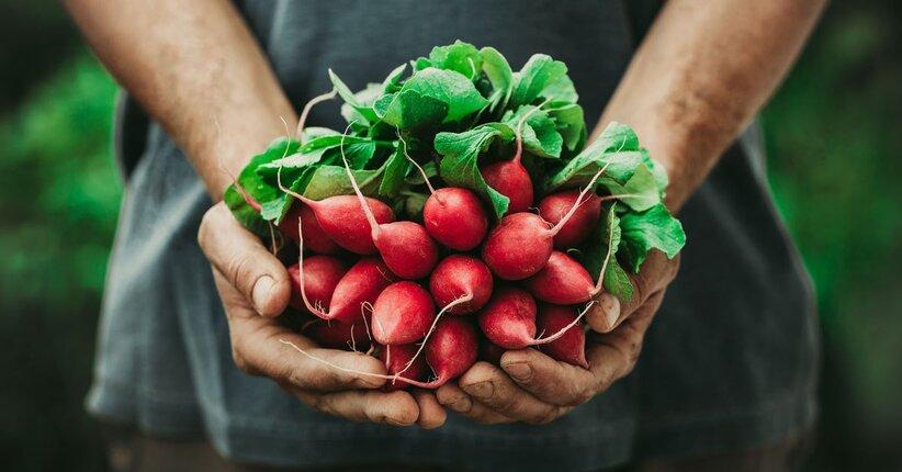 Ravanelli: varietà, proprietà e benefici, ma anche come usarli!