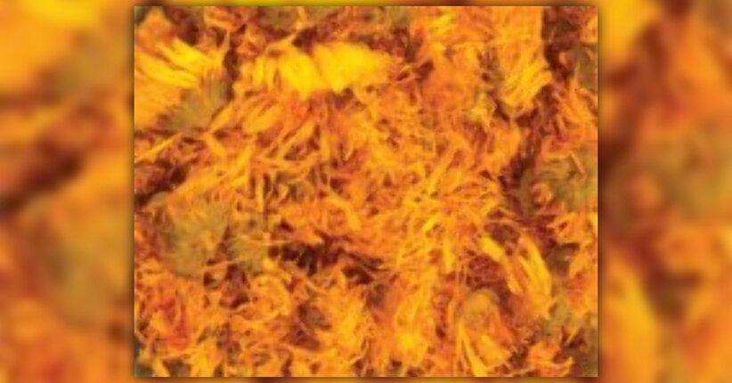 Repellenti per insetti e rimedi per la pelle