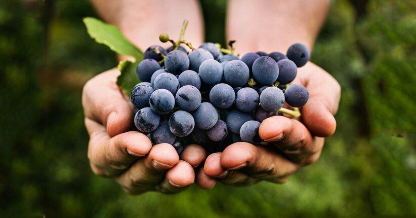 Settembre tempo di uva!