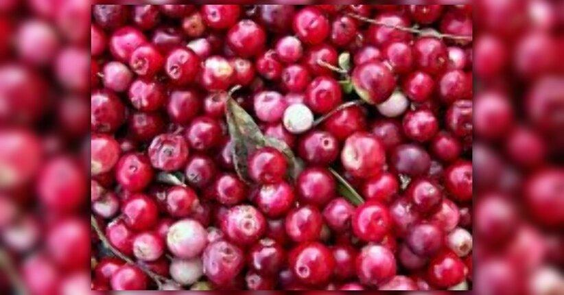 Succo di Cranberry Salugea