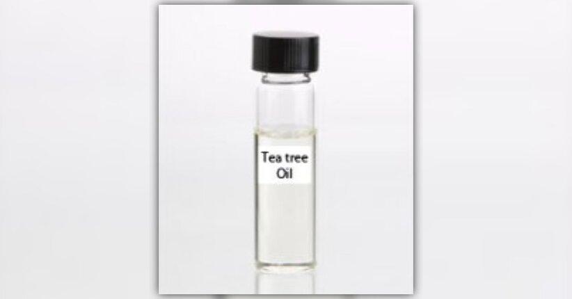 Tea tree oil: uso e benefici