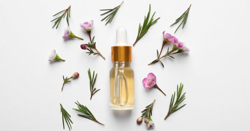 Tea Tree oil: il più potente antibatterico naturale