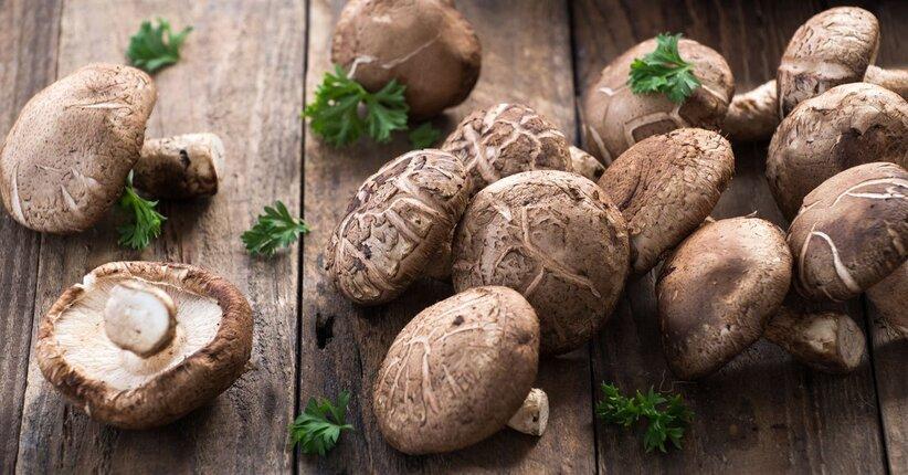 Un fungo speciale: lo shiitake
