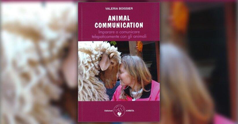 Una comunicazione in due direzioni