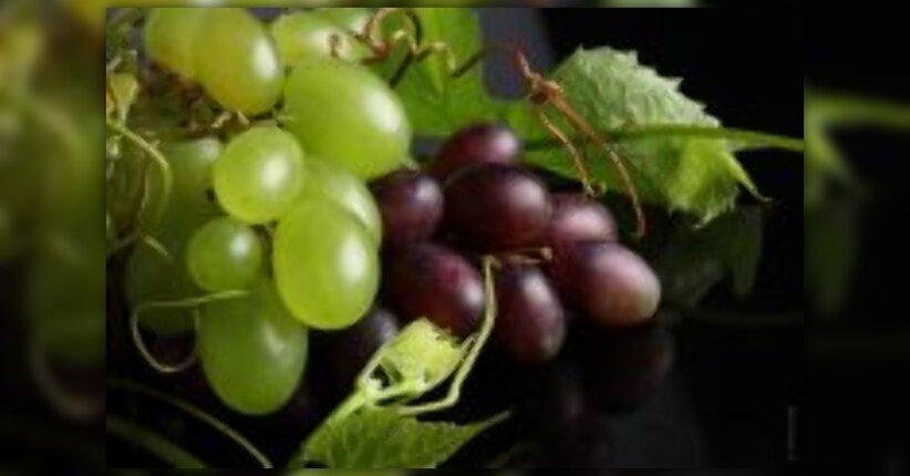 Uva: un solo frutto tanti benefici