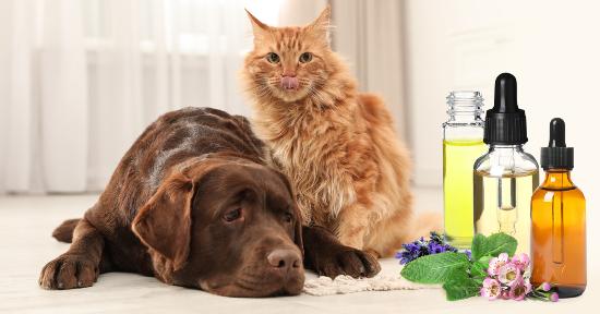 Aromaterapia per gli animali