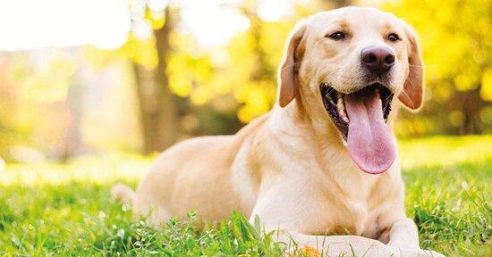 Cane: la salute inizia dalla bocca