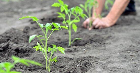 Coltivare un orto (bio)diverso dal solito