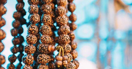 Conosci i semi di Rudraksha?